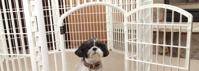 Best Playpen for Dogs of 2021 [COMPLETE LIST with COMPARISON]