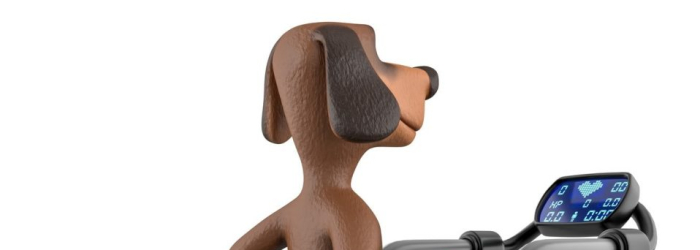 Treadmills For Dogs – Reviews of 2021 [COMPLETE with COMPARISON]